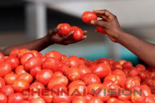 Tomato prices come down in Koyambedu, but egg rates go up