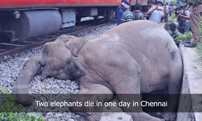 Two elephants die in one day in Chennai