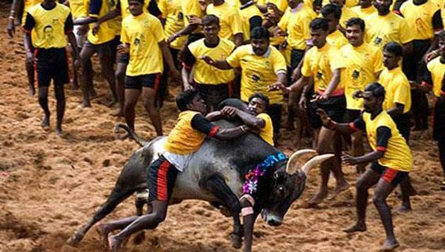 PETA moves Supreme Court against jallikattu